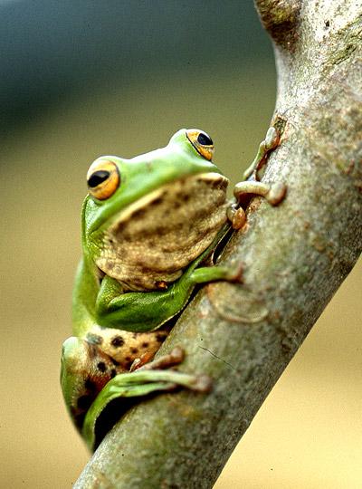 壁纸 动物 两栖 蛙 400_540 竖版 竖屏 手机
